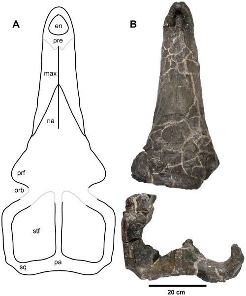 Plesiosuchus