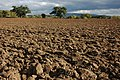 Ploughed field at Earl's Croome - geograph.org.uk - 1011659.jpg