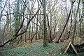 Poer Meadow Shaw - geograph.org.uk - 1611519.jpg