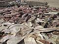 Poissons séchés près de Palmarin au Sénégal 1.JPG