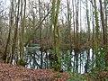 Pond, Cherrytree Shaw - geograph.org.uk - 335257.jpg