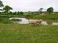Pond near Knockbridge Farm - geograph.org.uk - 423688.jpg