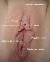 Portuguese Caption for Vulva.jpg