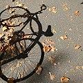 Pouya Bagheri Bike Shadow.jpg