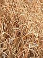 PrairieGrasses.jpg