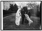 Pres. Coolidge buys tuberculosis seals, 12-1-24 LCCN2016849782.jpg