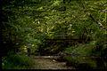 Prince William Forest Park PRWI9710.jpg