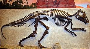 Prosaurolophus - Wall mounted skeleton
