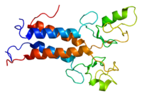 Protein BRCA1 PDB 1jm7.png