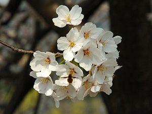 春's relation image