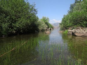 Río Tera a su salida del Lago de Sanabria 2.jpg