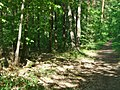 Rahnsdorf - Laubwald (Deciduous Woodland) - geo.hlipp.de - 36818.jpg