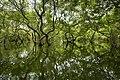 Ratargul Swamp Forest, Sylhet.jpg