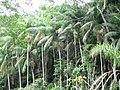Recanto do Palmital - Reserva Ibirapitanga - Santa Isabel-SP - panoramio.jpg