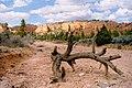 Red Canyon, Utah 01.jpg