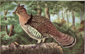 Reed-ruffed-grouse.png