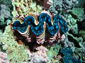 Reef2306 - Flickr - NOAA Photo Library.jpg