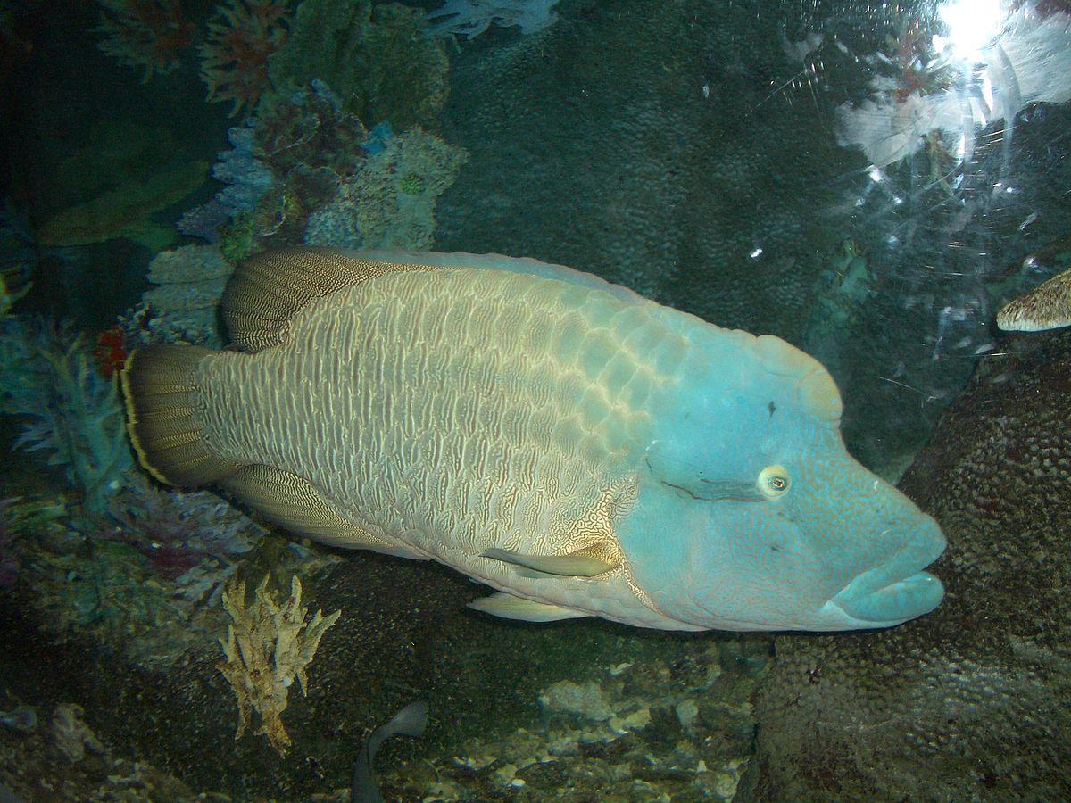 [Immagine: 1200px-ReefFish001.jpg]