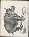 Rhinoceros unicornis - 1700-1880 - Print - Iconographia Zoologica - Special Collections University of Amsterdam - UBA01 IZ22000225.tif