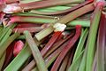 Rhubarb 4-6.jpg