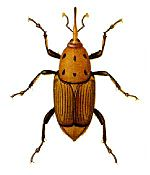 All insects have six legs.