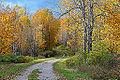 Ridge Road, Gatineau Park (7985502539).jpg