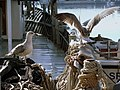 Rijeka - Seagulls and harbor - panoramio.jpg