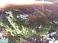River Don Reflections - 1, Oughtibridge - geograph.org.uk - 1293032.jpg