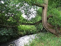 River Drone 362537 4d9dc2db.jpg