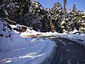 Road to Chopta.jpg