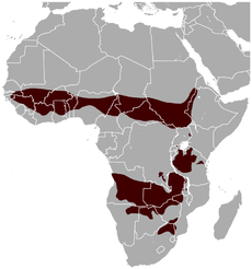 Roan Antelope Hippotragus equinus distribution map.png