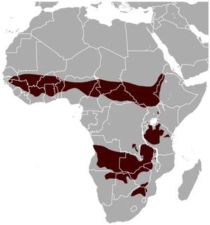 Roan antelope - Image: Roan Antelope Hippotragus equinus distribution map