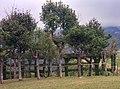 Roccolo - panoramio (2).jpg