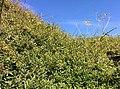 Rock-cornwall-england-tobefree-20150715-165329.jpg