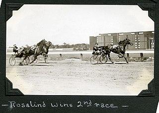 Rosalind (harness horse) American Standardbred racehorse