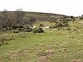 Rough grazing near Felton Fence - geograph.org.uk - 1802017.jpg