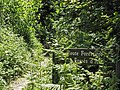 Route forestière des Fossés d'Allu (Forêt de Montmorency) - panoramio.jpg