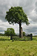 Royal Oak (5235)