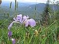 Saddle Mountain -9 (688756141).jpg