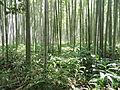 Sagano, Kyoto - DSC06104.JPG
