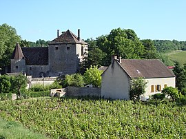 Vineyards and the chateau of Gamay