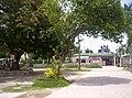 Sali-Argaw tree.JPG