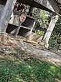 San jose de Tarros nueva frontera santa barbara honduras (2).jpg