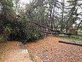 Sandy damage in Arlington, Virginia (8142666718).jpg