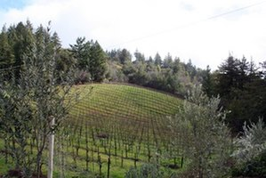 Santa Cruz County, California - Vineyard in the Santa Cruz Mountains