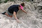 Save the sea turtles! Andersen teams with local university to conserve species 140625-F-AA000-001.jpg