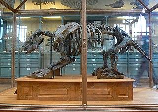 Scelidotheriidae Extinct subfamily of prehistoric ground sloths