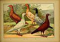 Schachtzabel 1906 Tafel 82.jpg