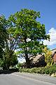 Schleswig-Holstein, Mönkloh, Naturdenkmal 1112-2 NIK 3734.JPG