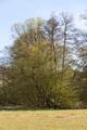 Schlitz Pford Fraurombach Breitecke NR 81455 Salix N.png